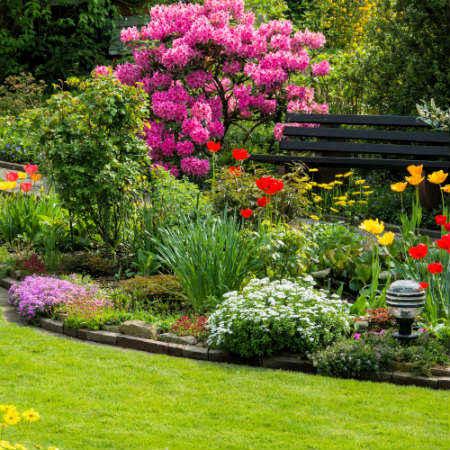rboles ornamentales para jardines pequeos krawczyk a foto shutterstockcom - Como Decorar Un Jardin Pequeo